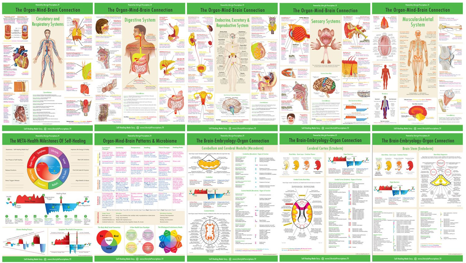 Organ-Mind-Brain Connection Charts and Posters, Lifestyle Prescriptions® Provider Training