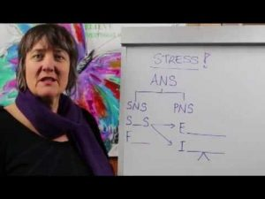 Impact of Stress on Our Health