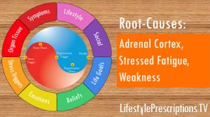 Adrenal Cortex: Stressed Fatigue, Weakness